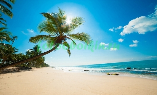 Фотообои Пальма на берегу