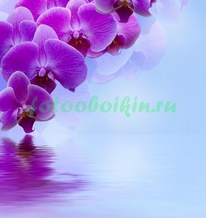 Склоняющаяся орхидея к воде