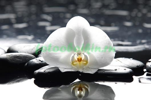 Отражение орхидеи