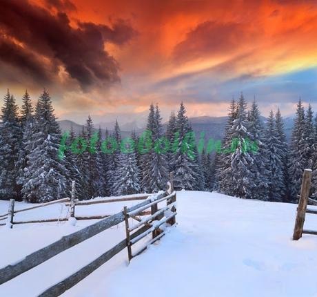 Фотообои Закат в зимнем лесу