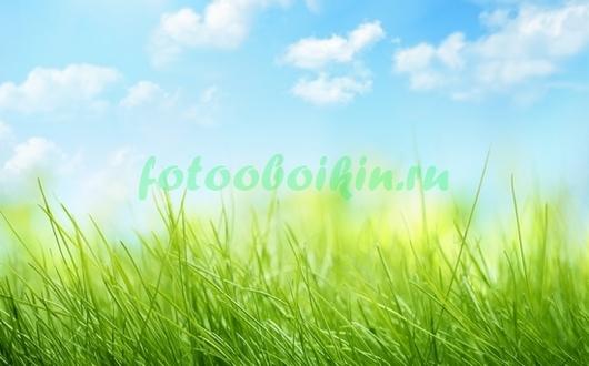 Трава под облаками