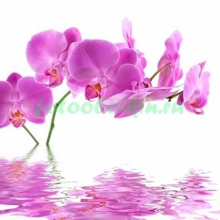 Ростущая орхидея из воды