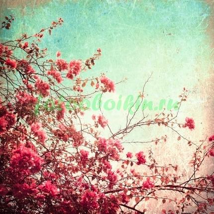 Цветы сакуры на ветках
