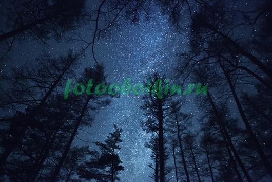 Звездное небо на фоне крон сосен