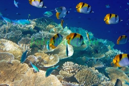 Рыбки на фоне кораллов