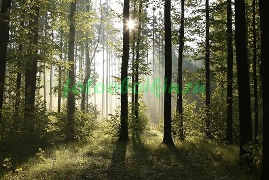 Солнце за лесом
