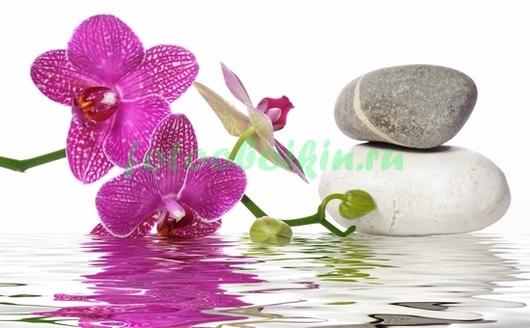 Китайская орхидея