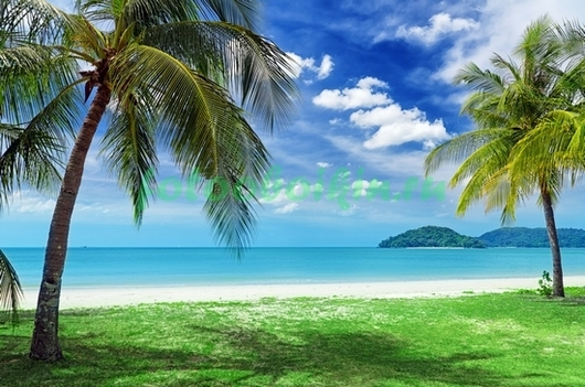 Зеленый газон у берега