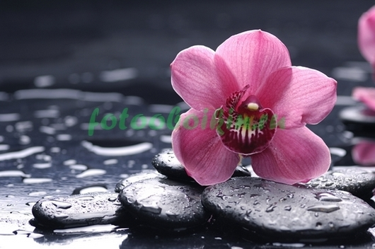 Розовая орхидея с галькой