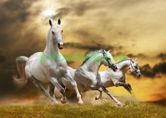 Изабелловые лошади