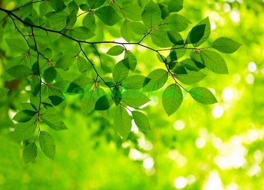 Солнце сквозь листву