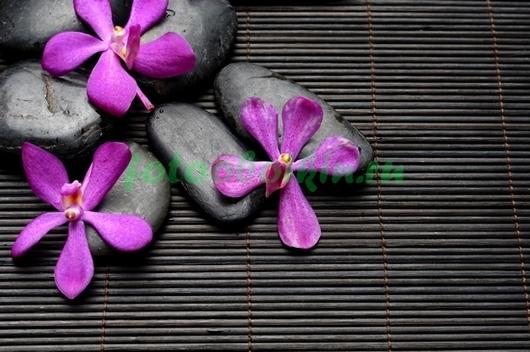 Камни с маленькими орхидеями