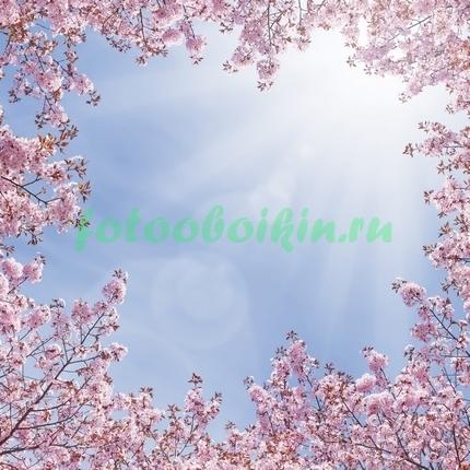 Сакура в небе
