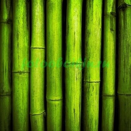 Фотообои Бамбуковые стволы