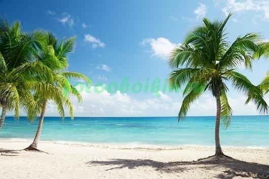 Фотообои Между пальм