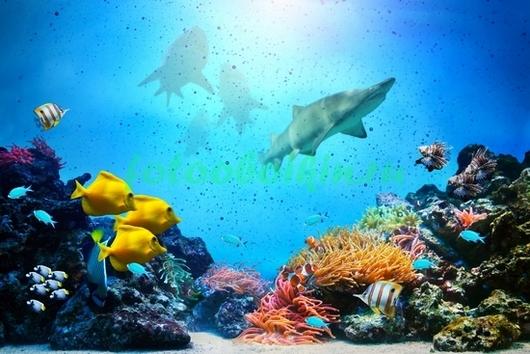 Акулы около рифов