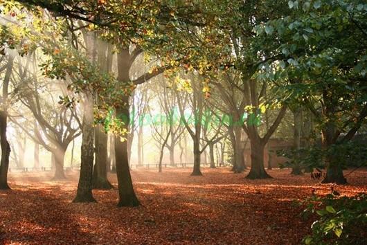 Лес 3Д