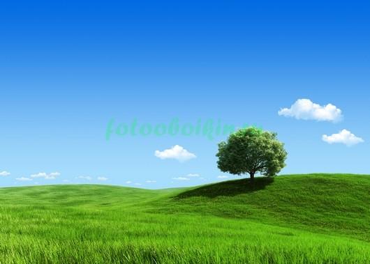 Зеленое поле 3Д