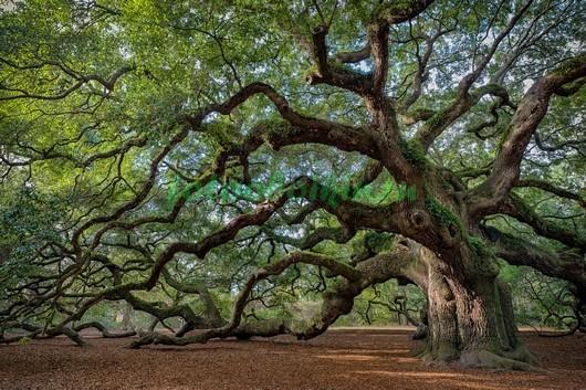 Старое дерево 3Д