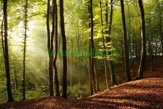 Лучи солнца в лесу 3Д