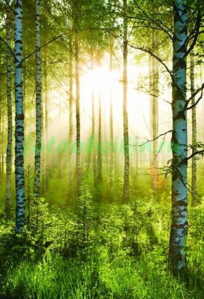 Фотообои Березовый лес 3Д