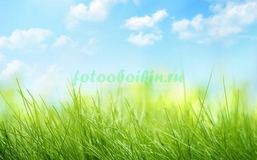 Фотообои Ярко зеленая трава