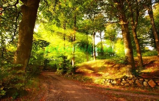 Фотообои Дорога в лесу 3Д