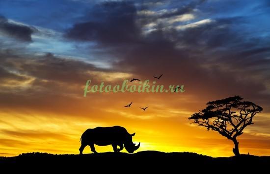 Носорог на закате