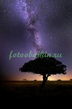 Акация на фоне звездного неба