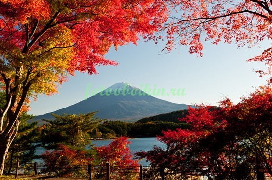 Красный клен в Японии