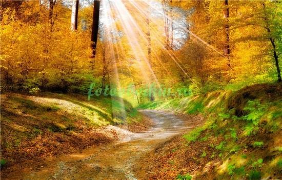 Дорожка в осеннем лесу