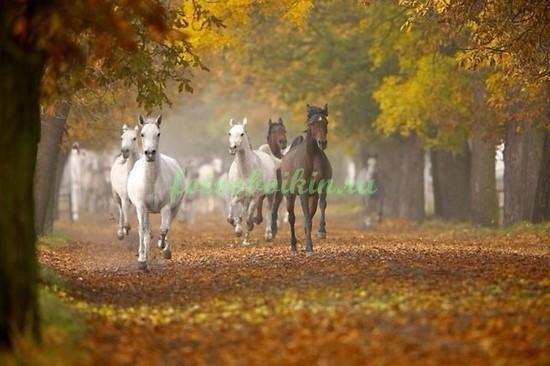 Кони в осеннем парке