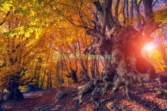 Старое дерево в осенних листьях