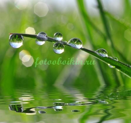 Травинка в росе