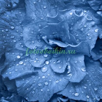 Капли на синем цветке