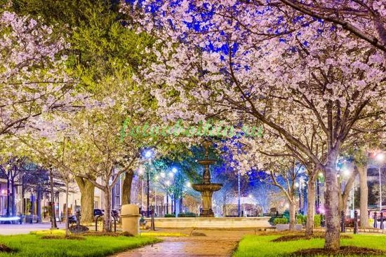 Вечерний парк в цветах
