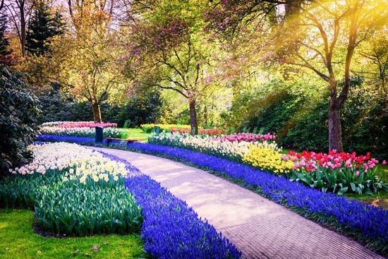 Парк с тюльпанами