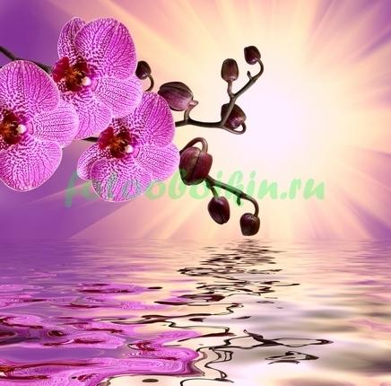 Пурпурная орхидея под солнцем