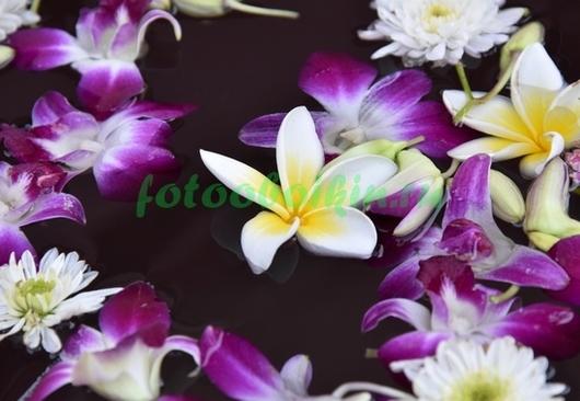 Цветы в воде