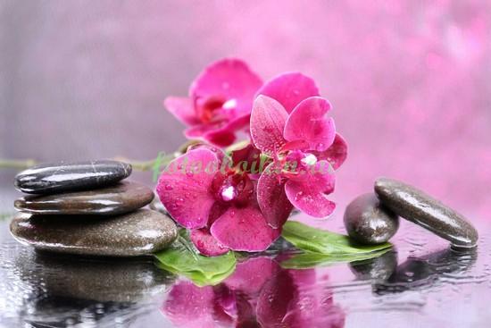 Орхидея с камнями