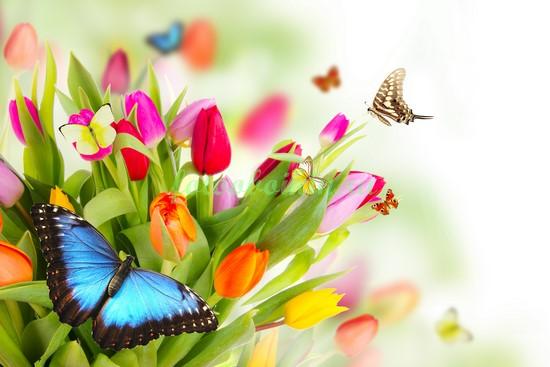 Тюльпаны с бабочками