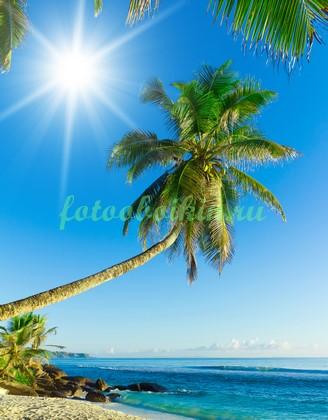 Высокая пальма на пляже