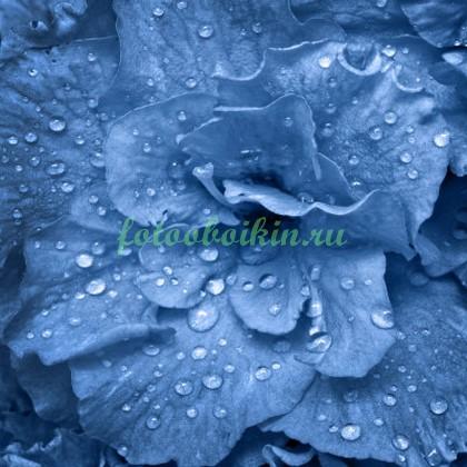 Синий цветок с каплями