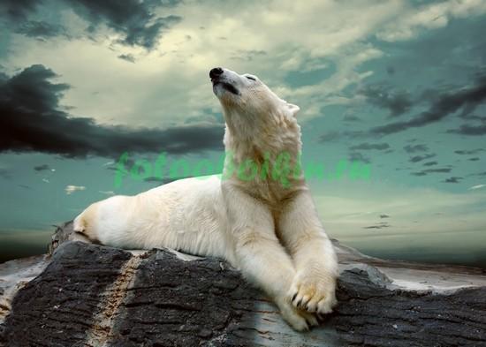 Медведь лежит на льдине