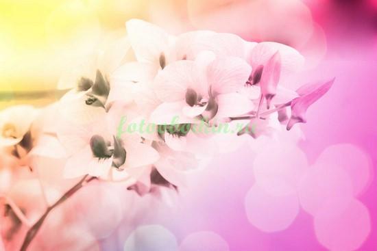 Орхидея в пастельных тонах