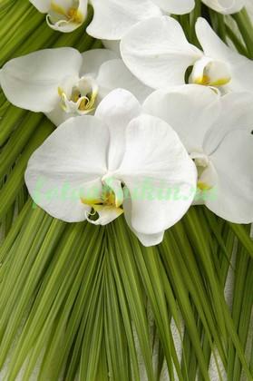 Белая орхидея на пальмовых ветках