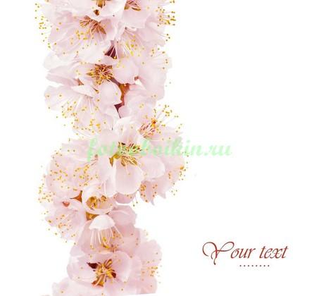 Цветы яблоньки