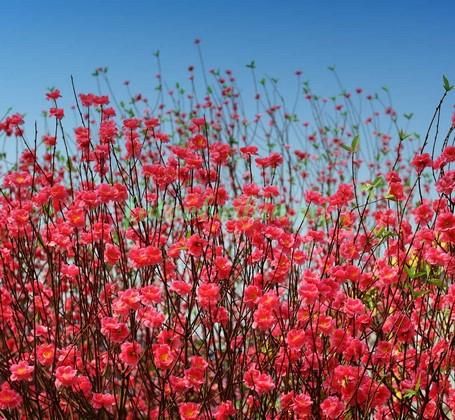 Ветки с цветами