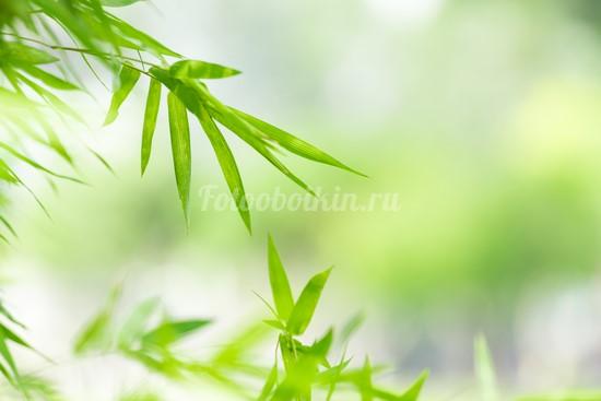 Фотообои Листья бамбука на зеленом фоне