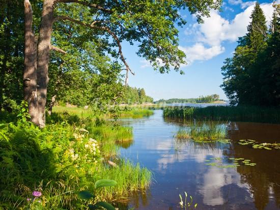Красивый пейзаж с рекой